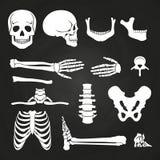 Ludzkie kości inkasowe na chalkboard ilustracja wektor