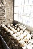 Ludzkie kości nadokienne Zdjęcie Royalty Free