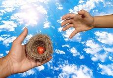 Ludzkie ręki utrzymują naturalnego gniazdeczko inside z czerwonym sercem dosięgać gniazdowe Rodzinne więzi i dziecka próbami ten, Obraz Royalty Free