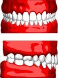 ludzkie zęby. Obraz Royalty Free