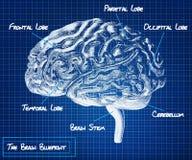 Ludzkiego mózg projekt royalty ilustracja