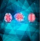 Ludzkiego mózg tło royalty ilustracja