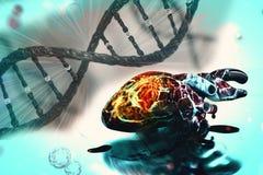 Ludzkiego serca badania pojęcia zdrowie kierowe komórki nowotworowe ilustracja wektor