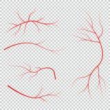 Ludzkiej krwi żyły, czerwoni naczynia na czarnym tle Fotografia Stock