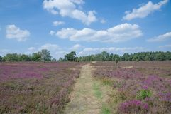 Lueneburg Heath,Lower Saxony,Germany Royalty Free Stock Photos
