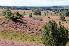 Lueneburg Heath Stock Images