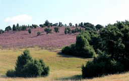 Lueneburg Heath Stock Image
