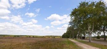 Lueneburger Heath Panorama Stock Image