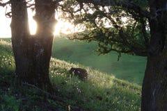 Lueur de Hillside Photos libres de droits