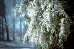 Lueur glaciale 10 Images libres de droits