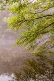 Lueurs vacillantes d'automne Photos libres de droits