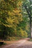 Lueurs vacillantes d'automne Images libres de droits