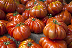 Lufa Farms Beefsteak Tomato. Market stall with lots of tomatoes stock photo