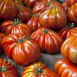 Lufa Farms Beefsteak Tomato. Market stall with lots of tomatoes Royalty Free Stock Images