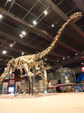 Lufengosaurus Magnus im Hong- Kongwissenschafts-Museum Stockbild