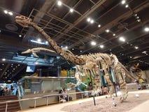 Lufengosaurus Magnus nel museo di scienza di Hong Kong Fotografie Stock Libere da Diritti