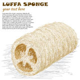 Luffa sponge Royalty Free Stock Photo