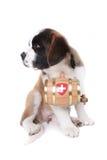 lufowy bernard szczeniaka ratuneku święty Obrazy Royalty Free