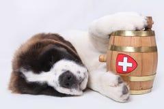 lufowy bernard szczeniaka ratuneku święty Fotografia Royalty Free