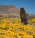 lufowy kaktus Zdjęcie Royalty Free