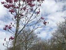 luft blomstrar handhumanfjädern Arkivfoto