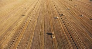 Luft-Brummenfeld des Videos 4k mit Weizenstapeln stock footage
