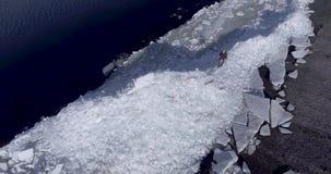 Luft-dron Ansicht des jungen aktiven glücklichen Mannes, der auf den Eisgletschern nahe Küstenlinie von Wintermeer bleibt Brummen stock video footage