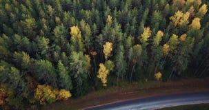 Luft- Gesamtlänge des grüne Kiefern-und gelbe Birken-Waldes, langsam schiebend über die Spitzen der Bäume - schwermütiges Video,  stock footage