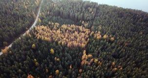 Luft- Gesamtlänge des grüne Kiefern-und gelbe Birken-Waldes, langsam schiebend über die Spitzen der Bäume - schwermütiges Video,  stock video footage