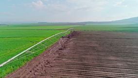 Luft- Gesamtlänge eines grünen Weizenfeldes in Nord-Israel stock video
