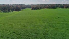 Luft- Gesamtlänge eines grünen Weizenfeldes in Nord-Israel stock video footage