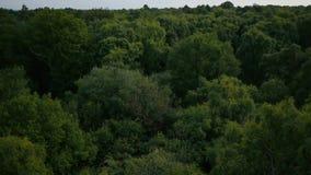Luft-Pan von Bäumen stock video