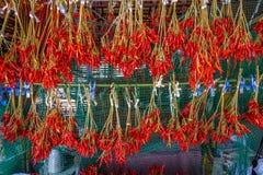 Luft-torkade toppna kryddiga chili Royaltyfria Bilder