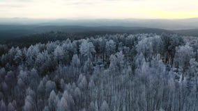 LUFTabschluß OBEN: Erste Sonnenstrahlen, die gefrorene gezierte Bäume der Abflussrinne bei Wintersonnenaufgang glänzen Fliegen üb stock video