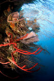 luftar havssvampar Arkivfoton