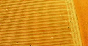 Luftaufnahme der landwirtschaftlichen Landschaft stock video footage