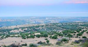Luftaufnahme der Olivenbaumgruppen stockbilder