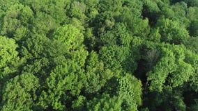 Luftaufnahme des Waldes stock video footage