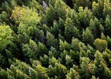 Luftbäume lizenzfreie stockfotografie