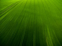 Luftbild eines üppigen Grüns archiviert Stockfotografie