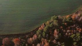 Luftbildkamerabewegungen vom Herbstwald zu den Feldern Videoaufnahmen stock video