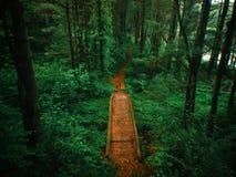 Luftbrummen schoss von einer Brücke und von einer Bahn durch einen üppigen Wald Stockbilder