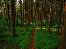 Luftbrummenansicht der Spur durch den Wald Stockfotografie