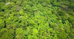 Luftbrummenansicht des tropischen Regenwaldes stock footage
