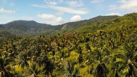 Luftbrummenansicht-Insellandschaft, Kokosnusspalmenplantagen, Thailand Natürliche idyllische Paradiesszene Gebirgshügel stock footage