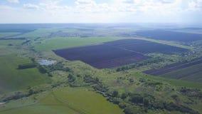 Luftbrummenansicht von gepflogenen und grünen Feldern, Bäume, Kleinstadt mit blauem bewölktem Himmel auf dem Hintergrund, Landwir stock video footage