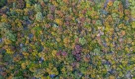 Luftbrummenbild eines bunten Waldes in Korfu Griechenland lizenzfreie stockbilder