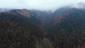 Luftbrummengesamtlängenansicht: Flug über Herbstberg mit Wäldern und Feldern Karpatenberge, Ukraine, Europa stock video footage