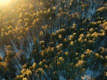 Luftbrummenschuß der Sonne beleuchtete Winterwald Lizenzfreies Stockbild
