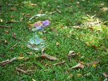 Luftbubbla på golvträdgård Arkivfoton
